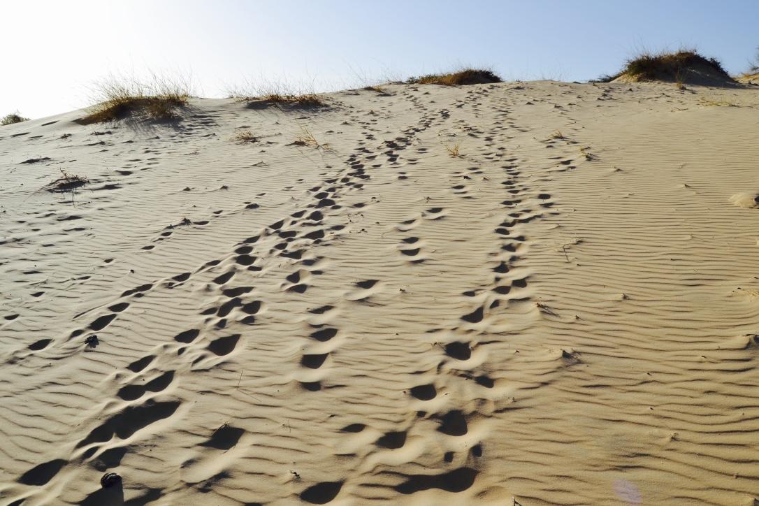 senegal dune